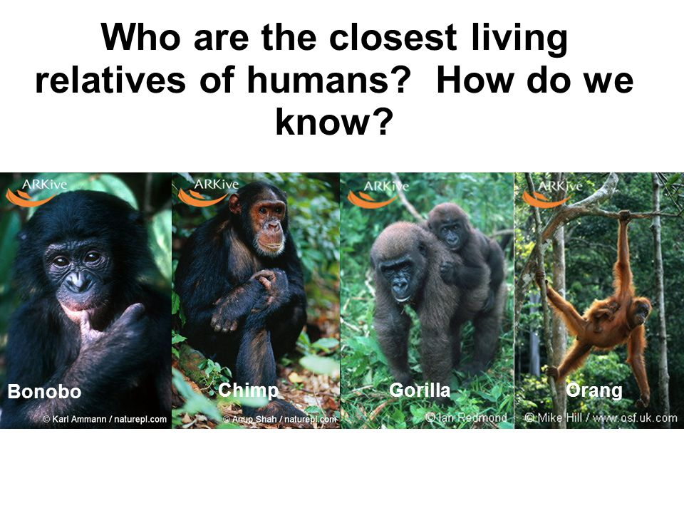 Who are the closest living relatives of humans How do we know