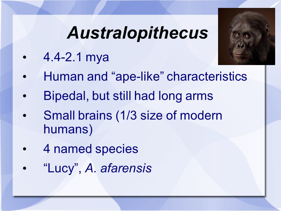 Australopithecus 4.4-2.1 mya Human and ape-like characteristics