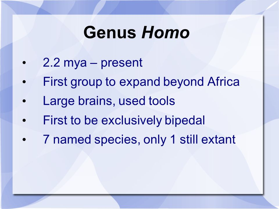 Genus Homo 2.2 mya – present First group to expand beyond Africa