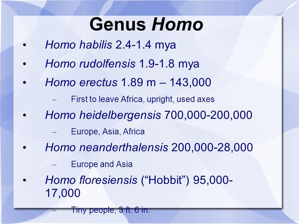 Genus Homo Homo habilis 2.4-1.4 mya Homo rudolfensis 1.9-1.8 mya