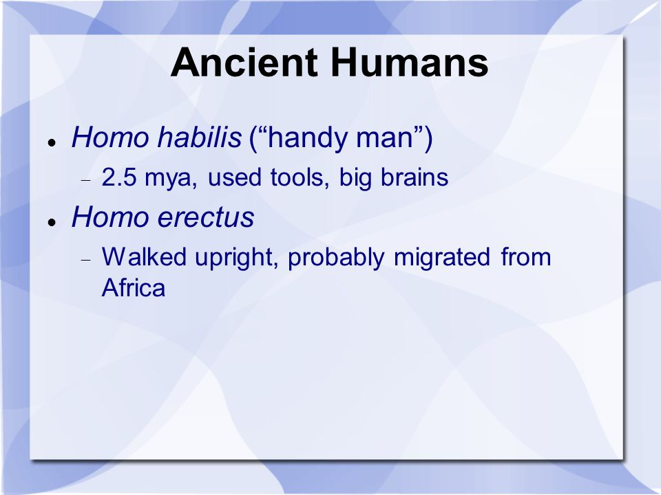 Ancient Humans Homo habilis ( handy man ) Homo erectus