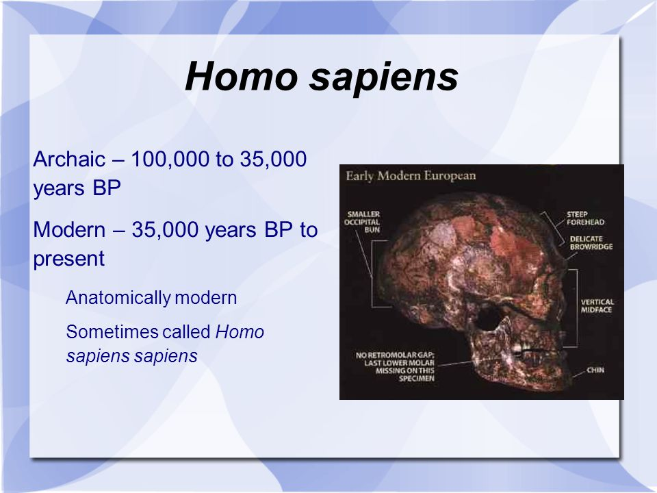 Homo sapiens Archaic – 100,000 to 35,000 years BP
