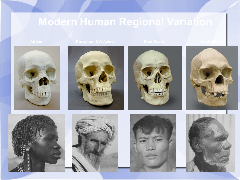 Modern Human Regional Variation