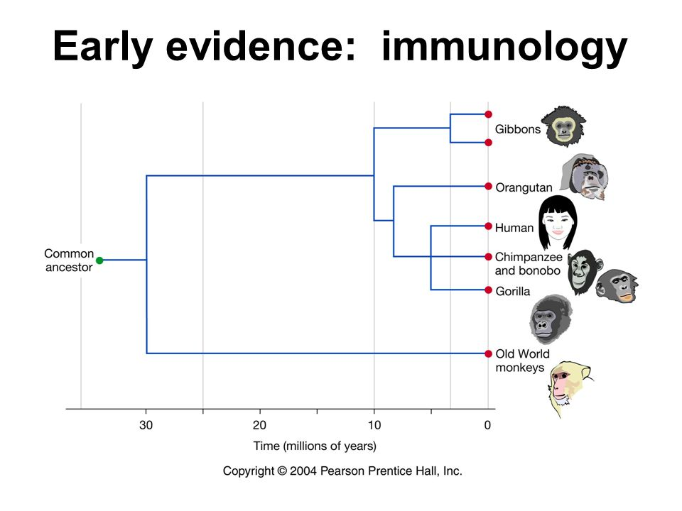 Early evidence: immunology