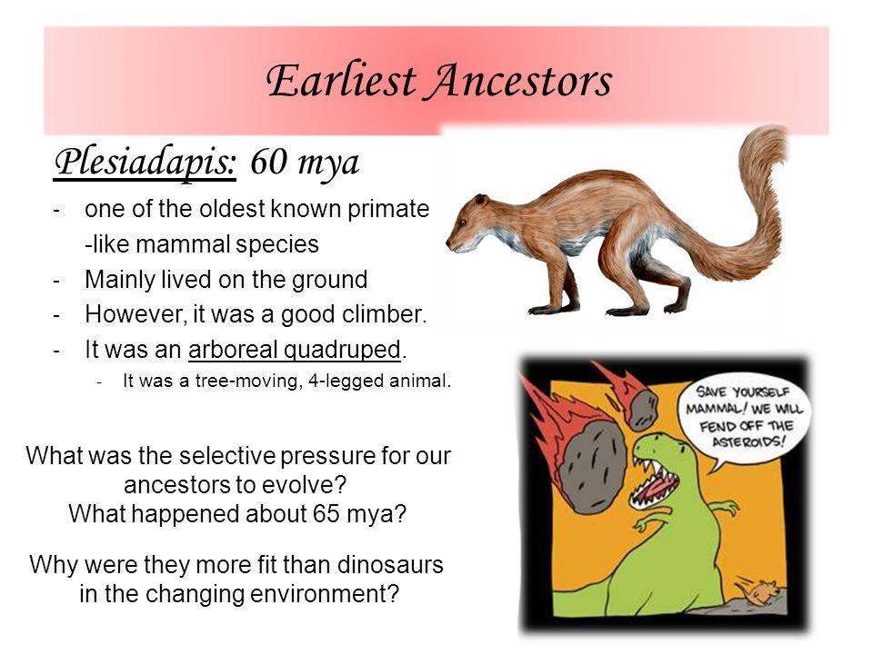 Earliest Ancestors Plesiadapis: 60 mya one of the oldest known primate