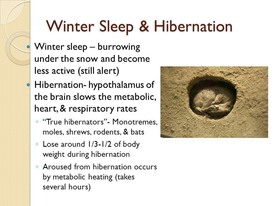 Winter Sleep & Hibernation