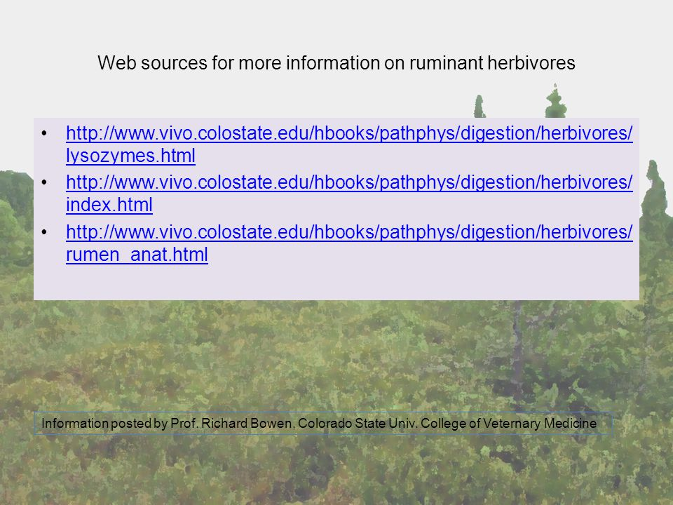 Web sources for more information on ruminant herbivores