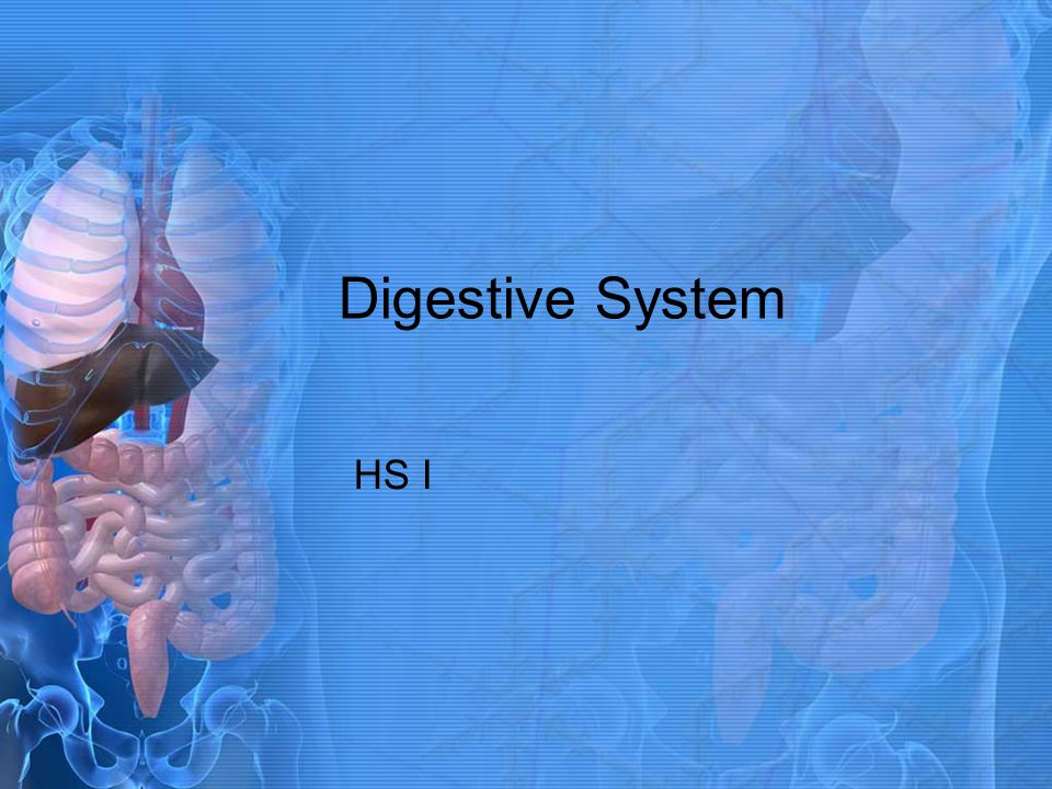 Digestive System HS I
