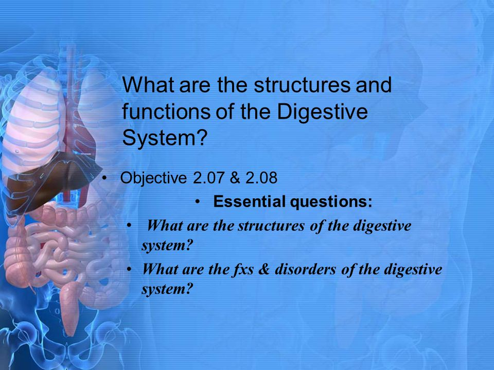 What are the structures and functions of the Digestive System
