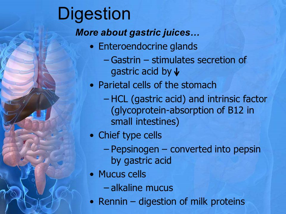 Digestion More about gastric juices… Enteroendocrine glands