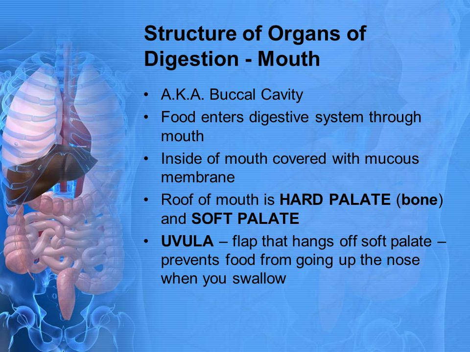 Structure of Organs of Digestion - Mouth
