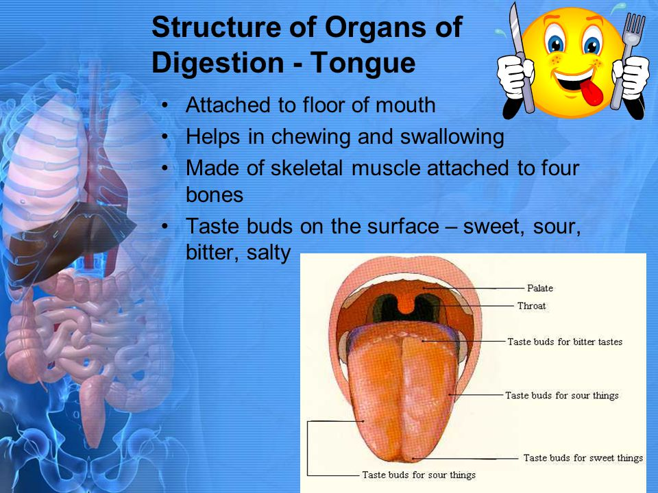 Structure of Organs of Digestion - Tongue