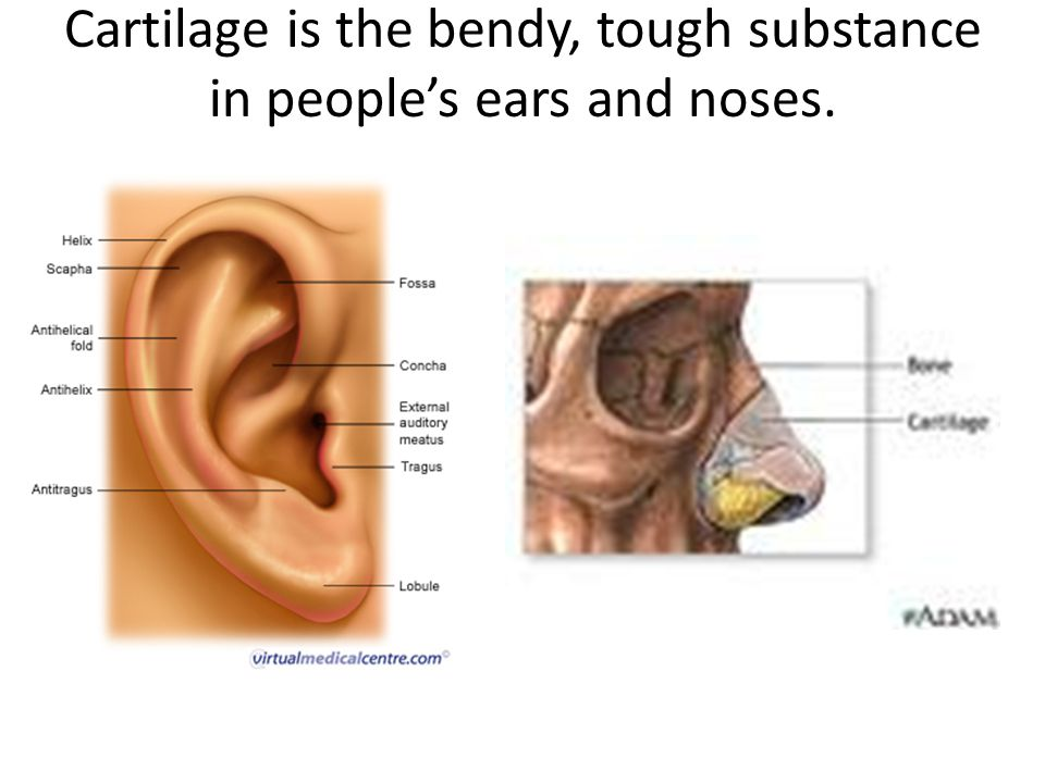 Cartilage is the bendy, tough substance in people's ears and noses.