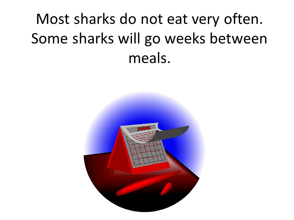 Most sharks do not eat very often