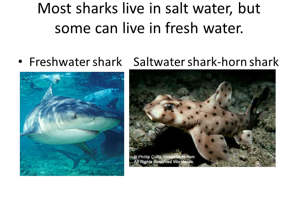 Most sharks live in salt water, but some can live in fresh water.
