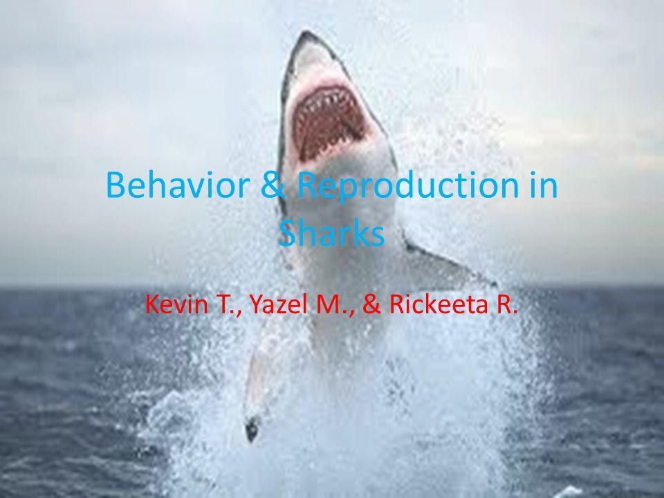 Behavior & Reproduction in Sharks