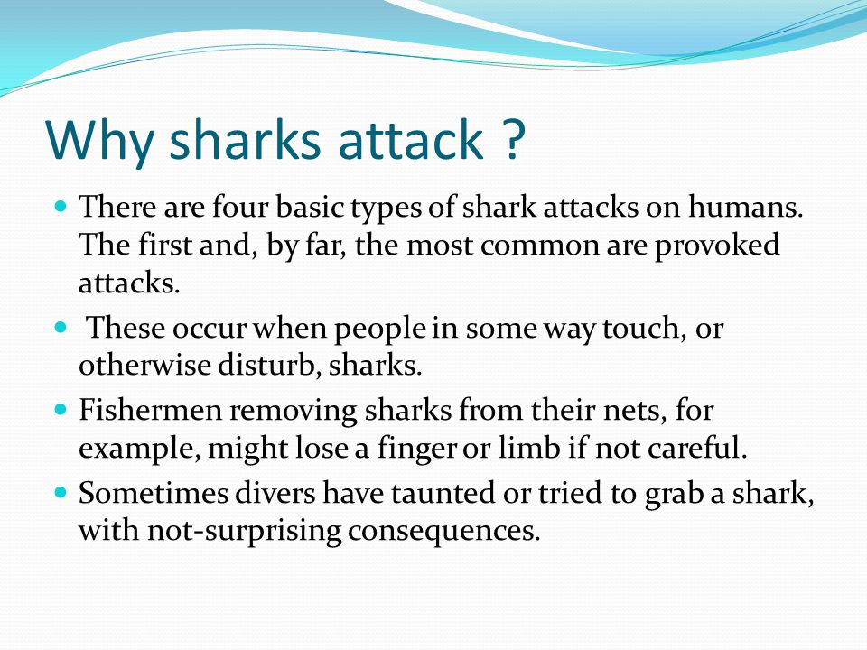 Why sharks attack There are four basic types of shark attacks on humans. The first and, by far, the most common are provoked attacks.