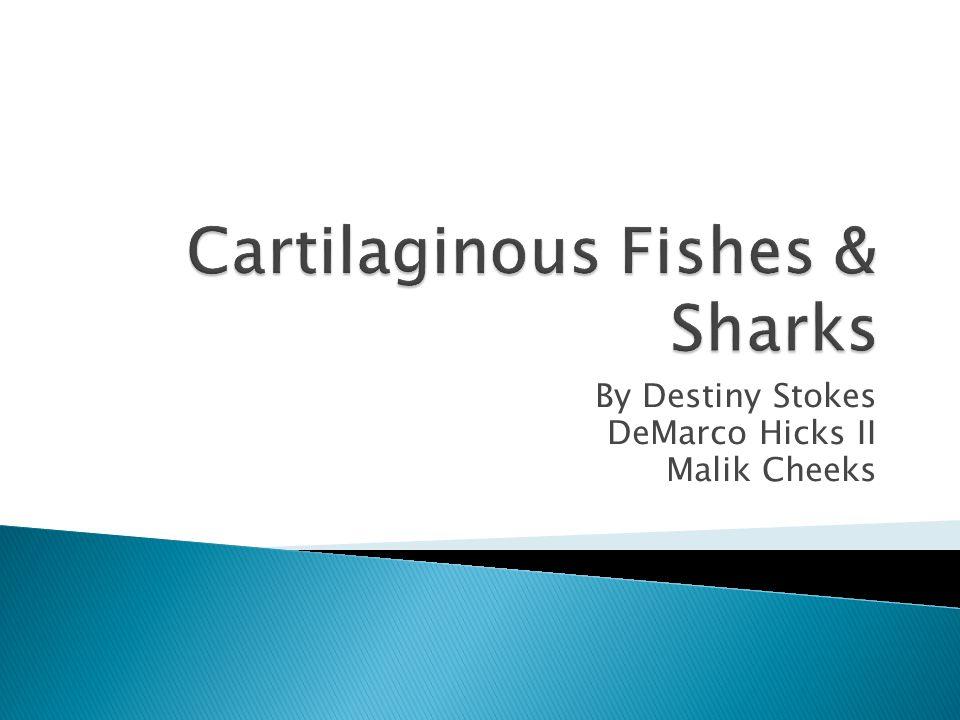 Cartilaginous Fishes & Sharks