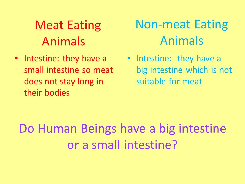 Non-meat Eating Animals Meat Eating Animals