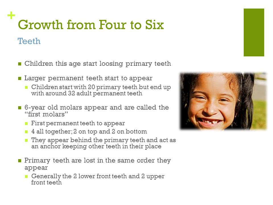 Growth from Four to Six Teeth