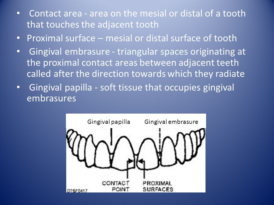Proximal surface – mesial or distal surface of tooth