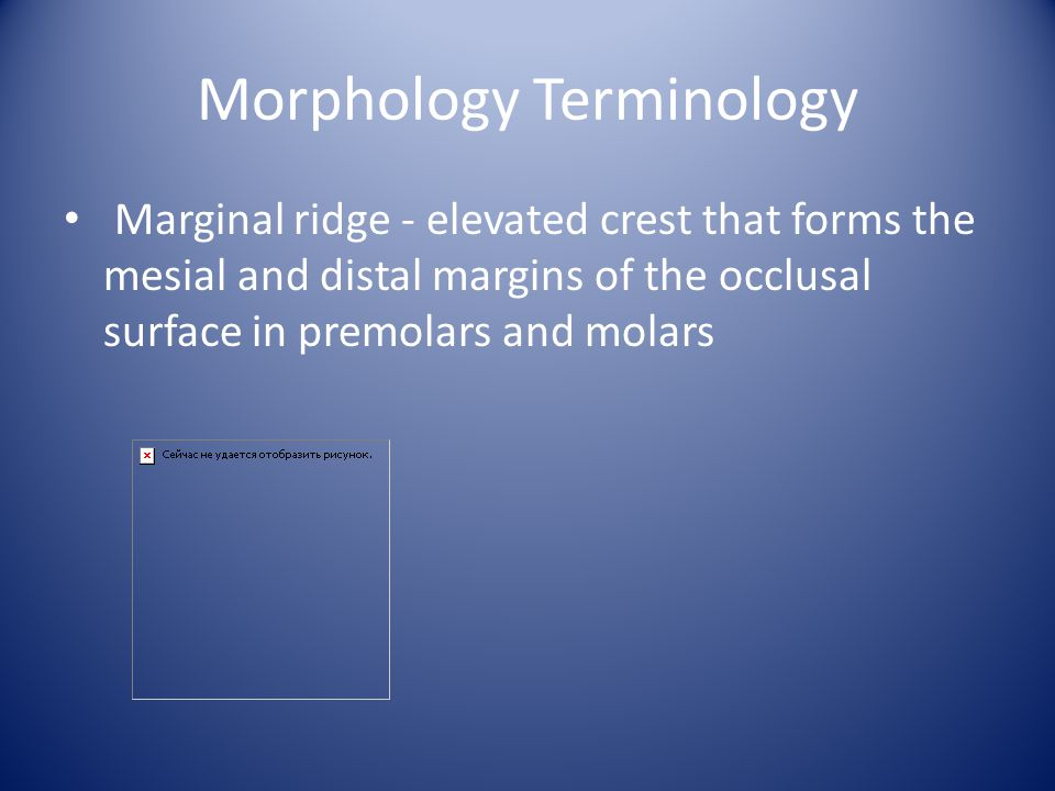 Morphology Terminology