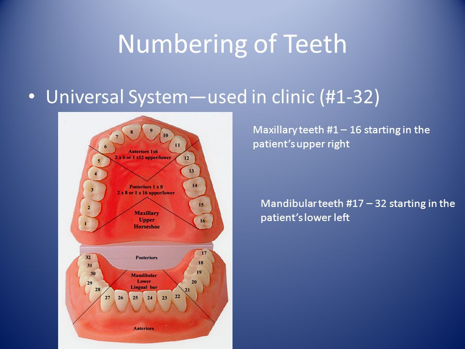 Numbering of Teeth Universal System—used in clinic (#1-32)