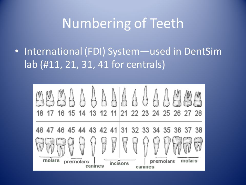 Numbering of Teeth International (FDI) System—used in DentSim lab (#11, 21, 31, 41 for centrals)