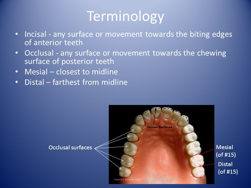 Terminology Incisal - any surface or movement towards the biting edges of anterior teeth.