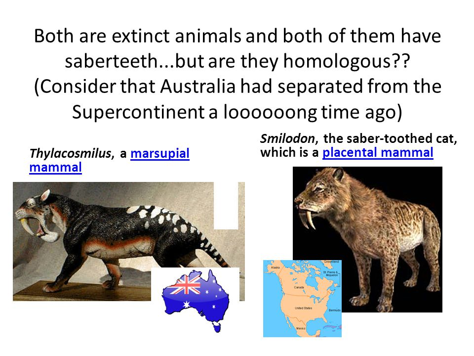 Both are extinct animals and both of them have saberteeth