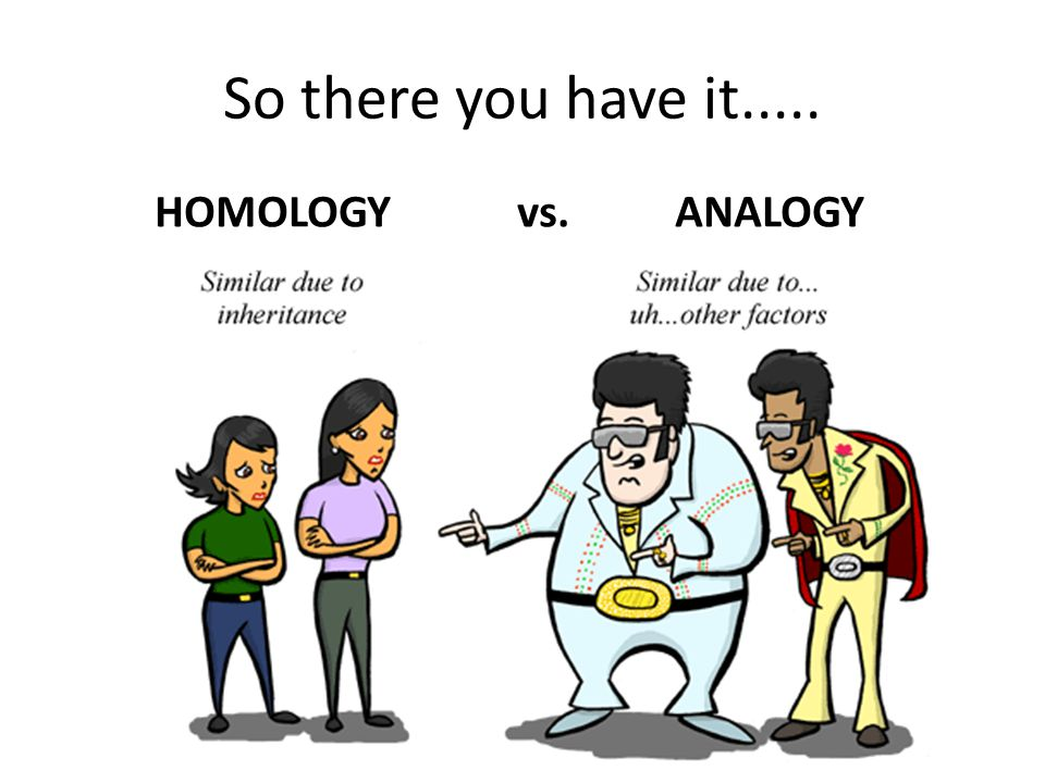 So there you have it..... HOMOLOGY vs. ANALOGY