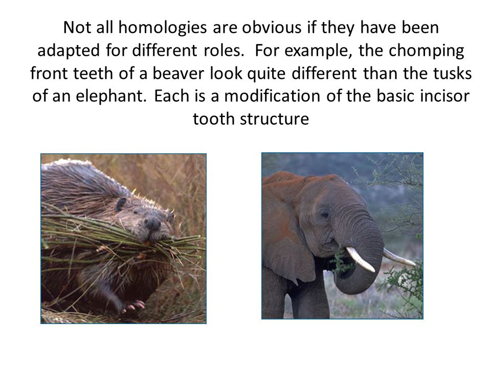 Not all homologies are obvious if they have been adapted for different roles.