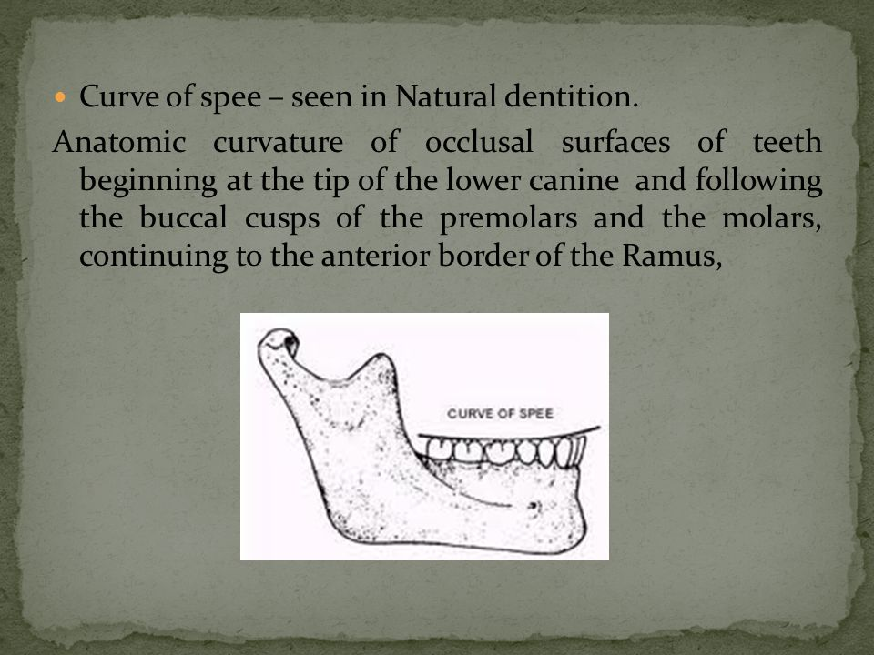 Curve of spee – seen in Natural dentition.