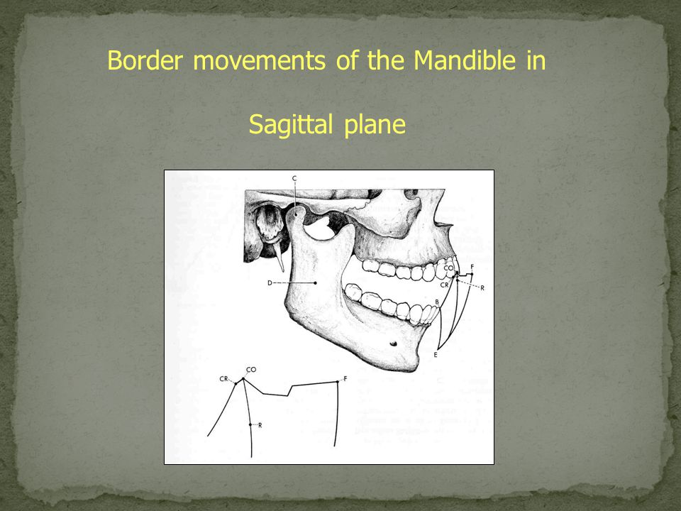 Border movements of the Mandible in