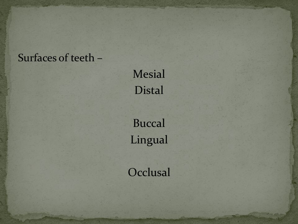 Surfaces of teeth – Mesial Distal Buccal Lingual Occlusal
