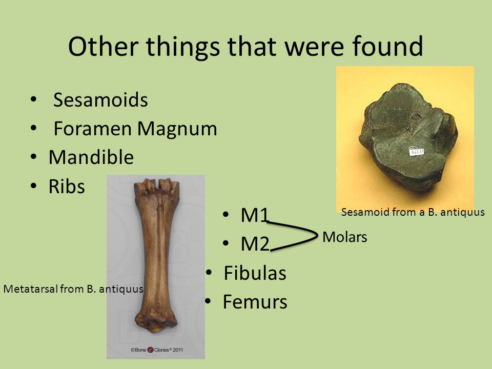 Other things that were found