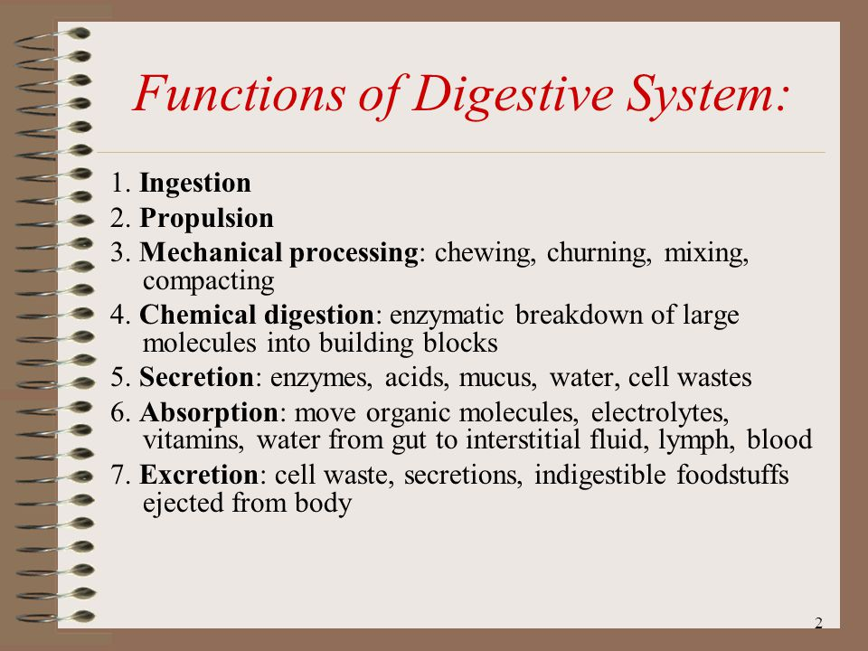 Functions of Digestive System: