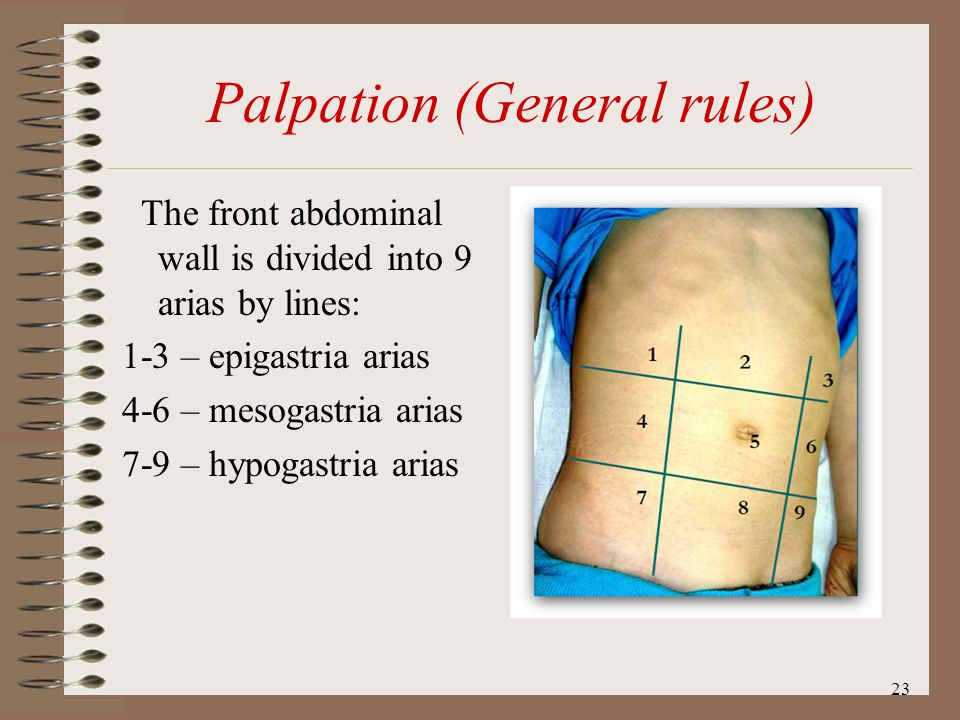 Palpation (General rules)
