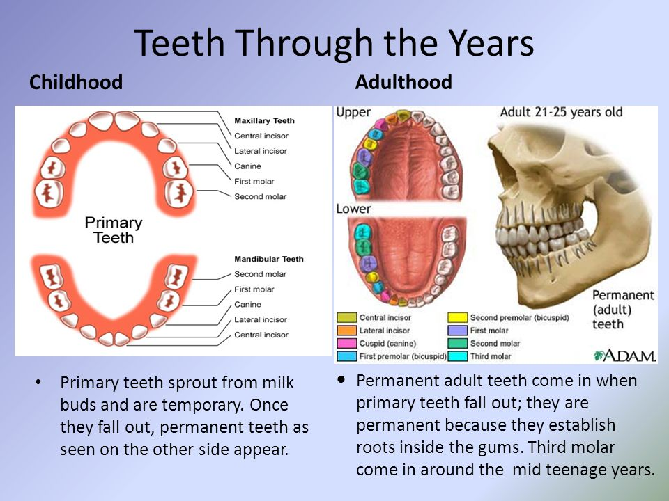 Teeth Through the Years