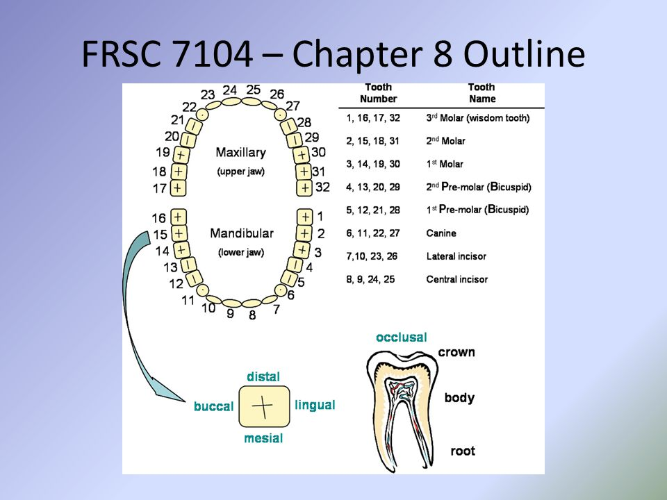 FRSC 7104 – Chapter 8 Outline