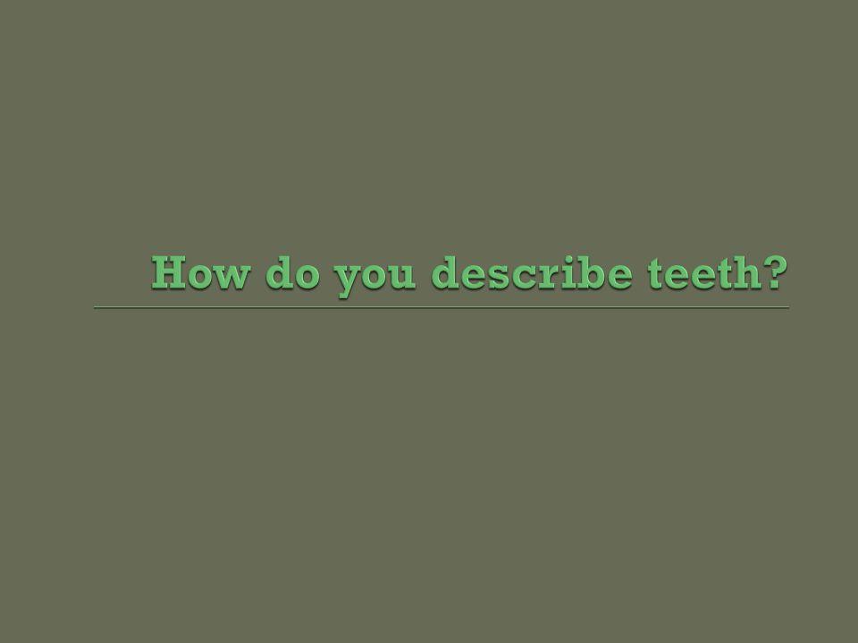 How do you describe teeth