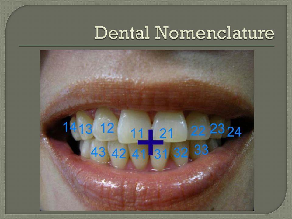 Dental Nomenclature FDI Classification (used Australia & worldwide)