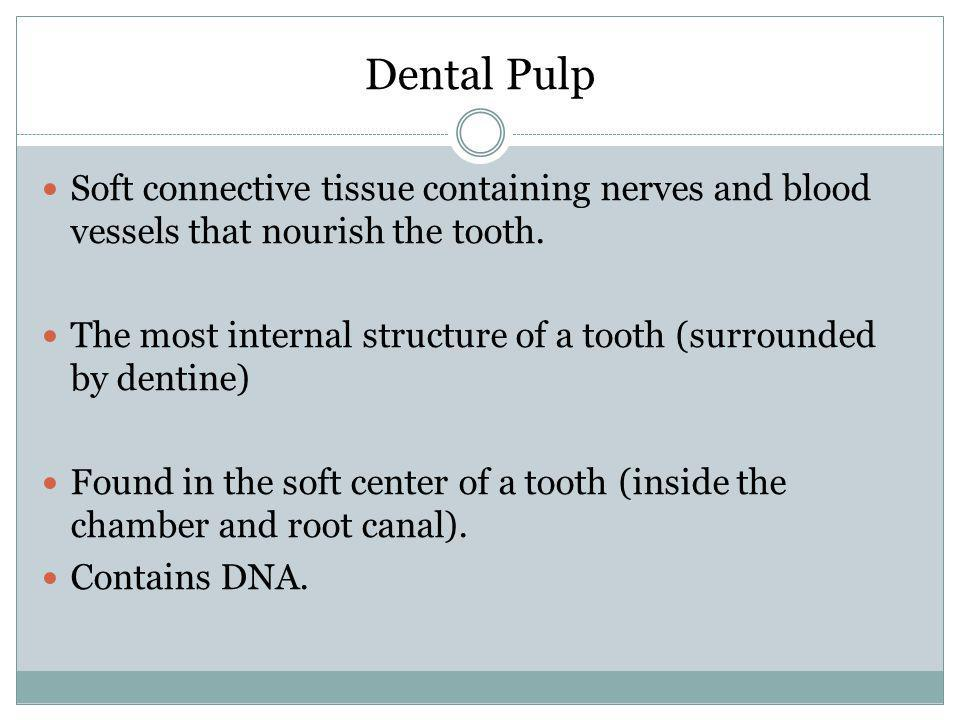 Dental Pulp Soft connective tissue containing nerves and blood vessels that nourish the tooth.