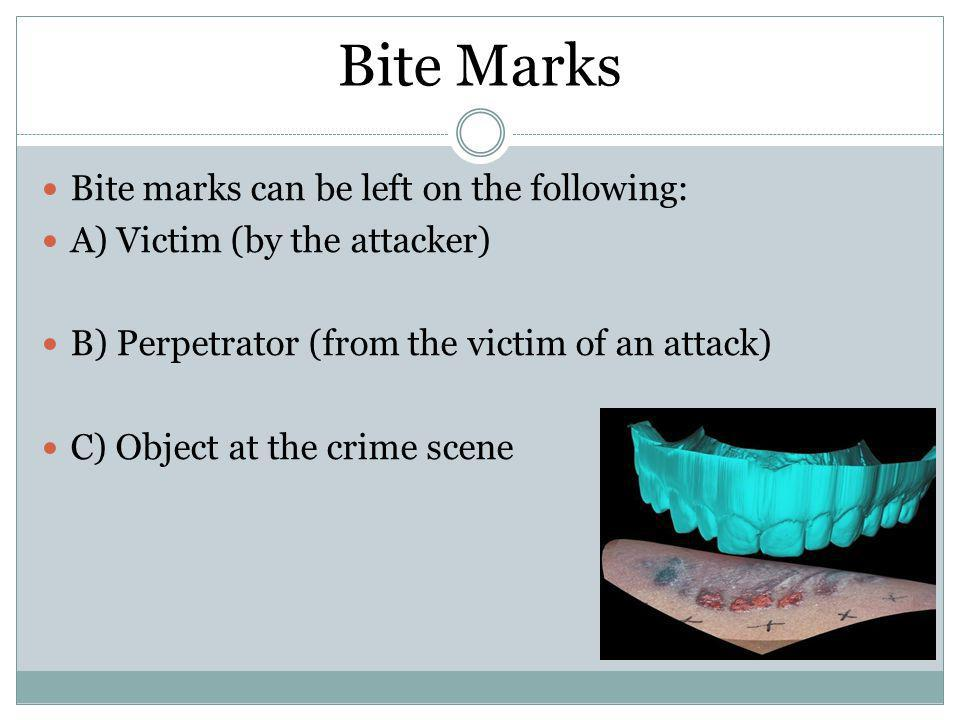 Bite Marks Bite marks can be left on the following: