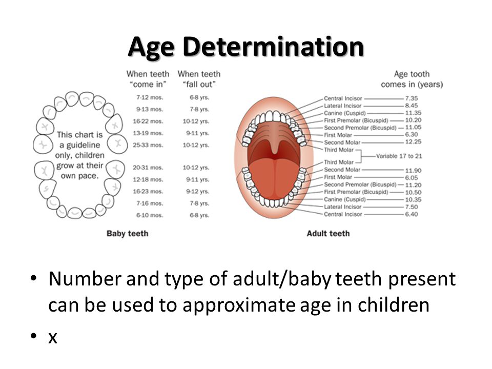 Age Determination Number and type of adult/baby teeth present can be used to approximate age in children.