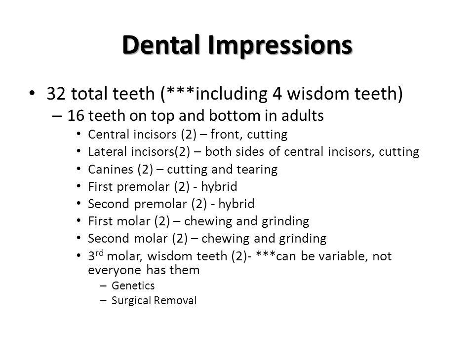 Dental Impressions 32 total teeth (***including 4 wisdom teeth)
