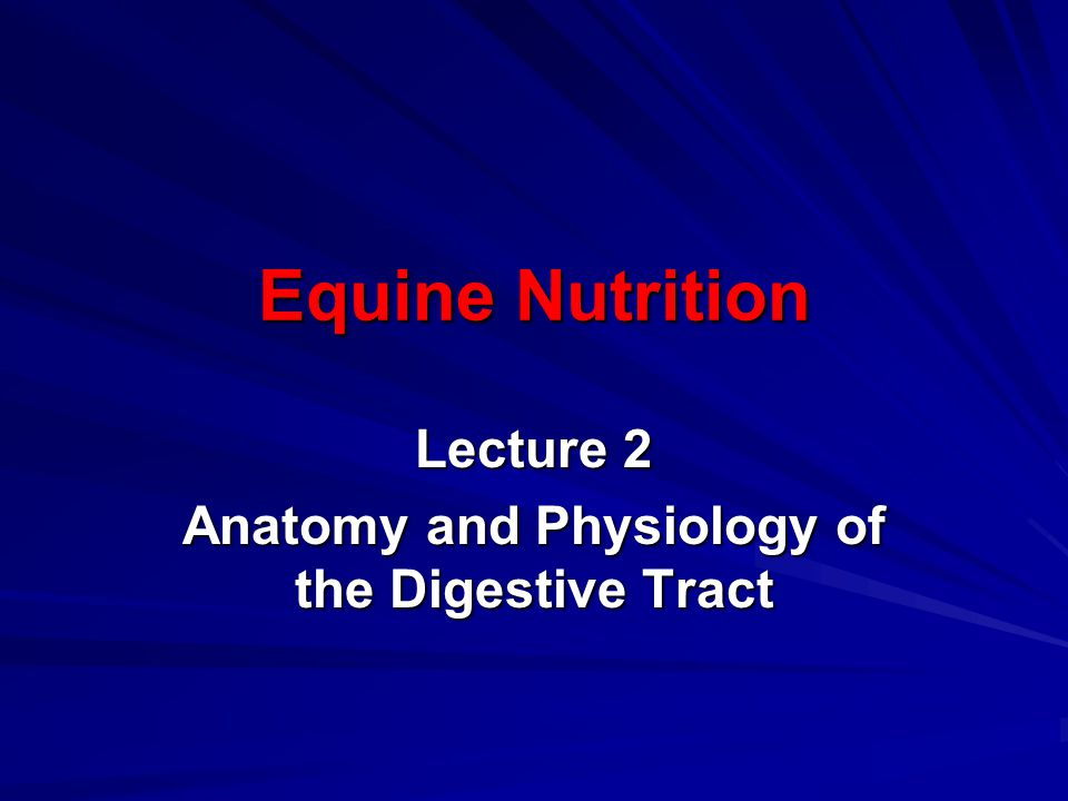 Lecture 2 Anatomy and Physiology of the Digestive Tract