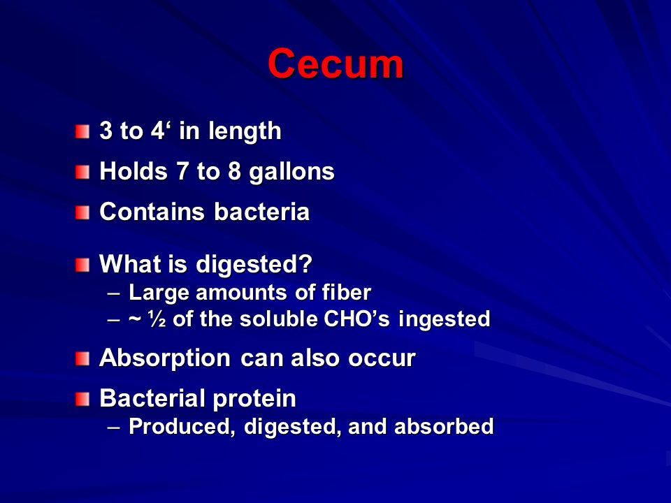 Cecum 3 to 4' in length Holds 7 to 8 gallons Contains bacteria