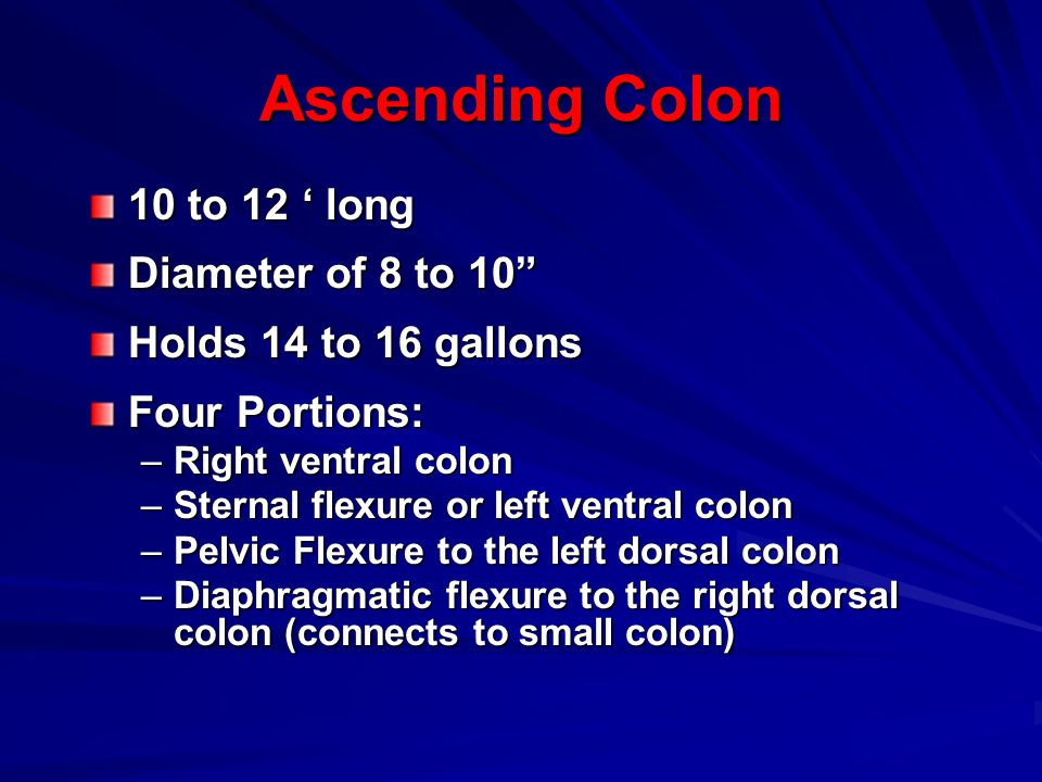Ascending Colon 10 to 12 ' long Diameter of 8 to 10