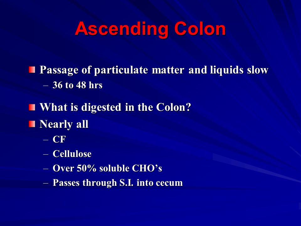 Ascending Colon Passage of particulate matter and liquids slow